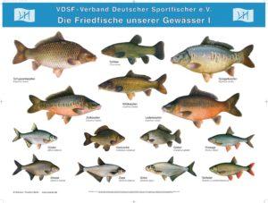 Arbeitsbl tter s sswasserfische neunaugen fische krebse for Heimische fische