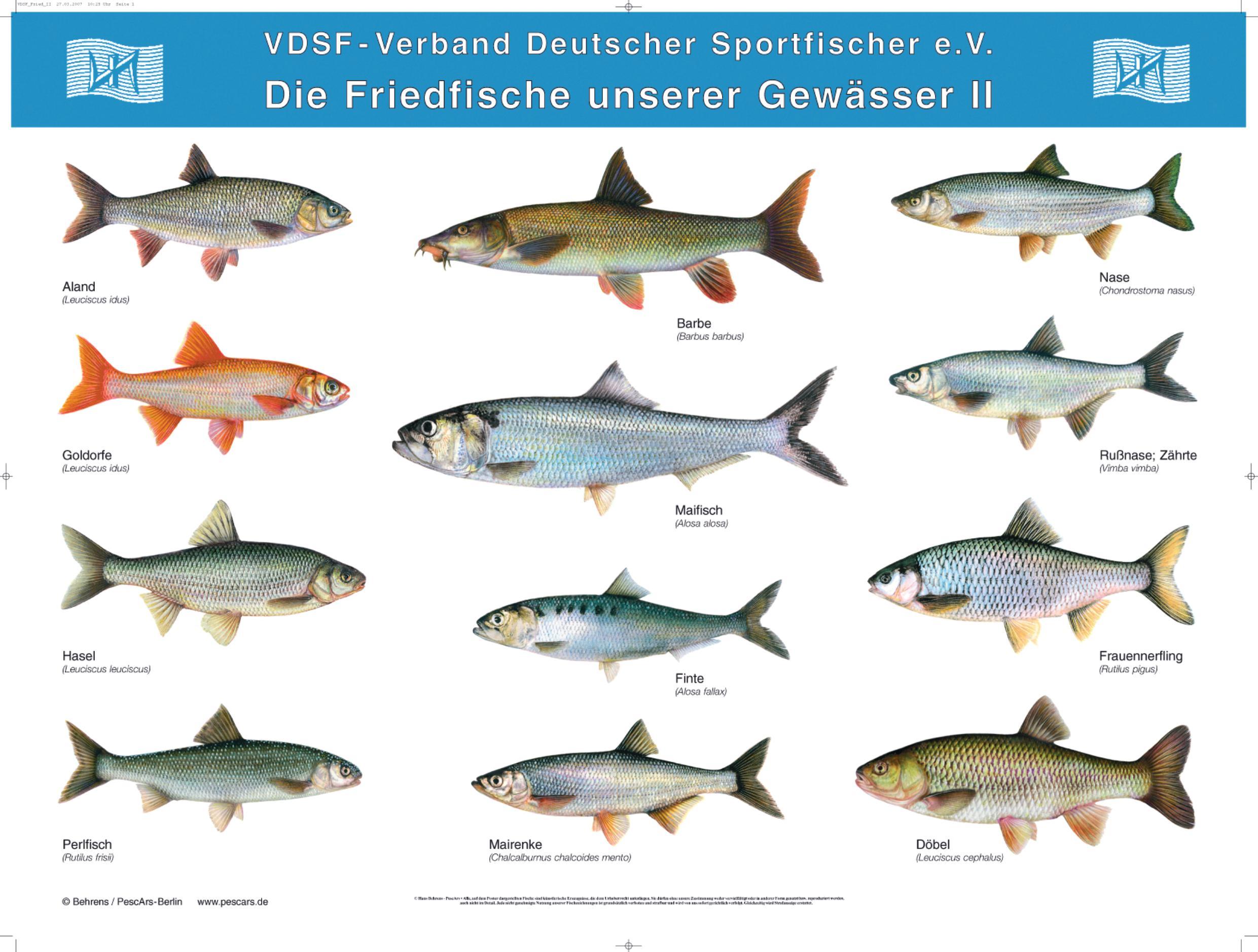 postersatz der heimischen fische 5 poster dafv shop