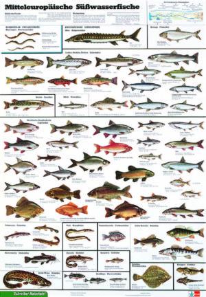 Lehrmaterial für die Fischerprüfung