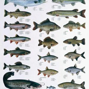 PescArs - Kunst um den Fisch