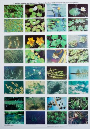 Postersatz Indikatororganismen, Pflanzen usw.